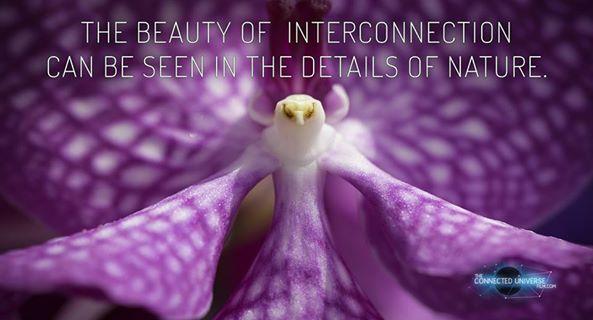 purple flower orchid