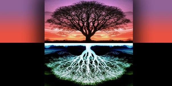 drvs korijenima