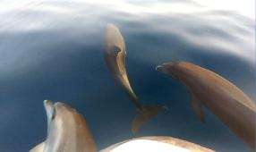 dolphinsA6