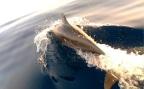 dolphinsA9